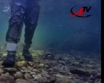 Anglers TV Fly Fishing México Wild Trout No.4 Bosque de Arcoiris